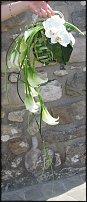 www.floristic.ru - Флористика. КАЛЛЫ