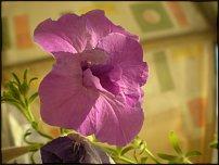 www.floristic.ru - Флористика. Просьба в стиле Help!