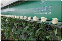 www.floristic.ru - Флористика. Срезка и горшечка из Российских питомников