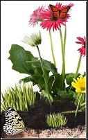 www.floristic.ru - Флористика. Болтаем о конкурсах :)