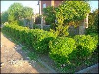 www.floristic.ru - Флористика. Живая изгородь