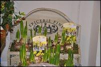www.floristic.ru - Флористика. Фото отчет с выставки Дюссельдорф.Январь 2012