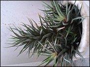 www.floristic.ru - Флористика. Вопросы по уходу за комнатными растениями