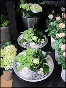 www.floristic.ru - Флористика. Оформление горшечных растений.