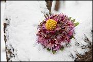 www.floristic.ru - Флористика. Юлия Гусева приглашает.