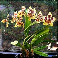 www.floristic.ru - Флористика. Освещение для горшечных растений