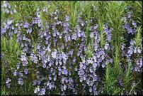 www.floristic.ru - Флористика. Лекарственные комнатные