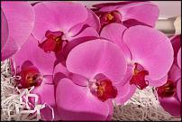 www.floristic.ru - Флористика. оптовый интернет магазин цветов для профессионалов
