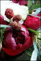 www.floristic.ru - Флористика. Спрей оазис для продления свежести живых цветов.