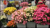 "www.floristic.ru - Флористика. 9-я международная выставка цветов ""Flowers&Hortech Ukraine 2015"""