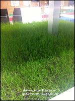 www.floristic.ru - Флористика. Как вырастить траву для композиций в домашних усливиях?