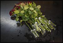 www.floristic.ru - Флористика. Нужна Ваша помощь!
