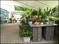 www.floristic.ru - Флористика. Экскурсии по европейским плантациям