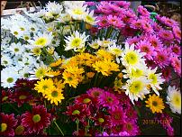 www.floristic.ru - Флористика. Сколько вы зарабатываете на Флористике? - Анонимный опрос
