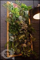 www.floristic.ru - Флористика. Фитопанель и мох