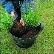 Нажмите на изображение для увеличения Название: lavendel2.jpg Просмотров: 291 Размер:389.8 Кб ID:593650