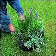 Нажмите на изображение для увеличения Название: lavendel3.jpg Просмотров: 455 Размер:375.2 Кб ID:593651