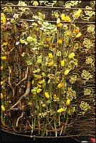 """www.floristic.ru - Флористика. Флористический конкурс """"Московская весна"""" + показы российских флористов"""