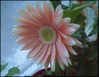 www.floristic.ru - Флористика. Фотографии фитодизайна