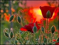 www.floristic.ru - Флористика. Полевые цветы