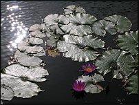 www.floristic.ru - Флористика. садово-парковое искусство китая