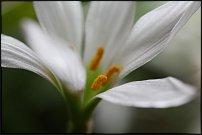 www.floristic.ru - Флористика. Наши любимые цветы.
