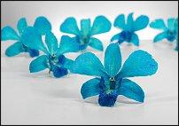 www.floristic.ru - Флористика. ТЮМЕНЬ. Где купить?