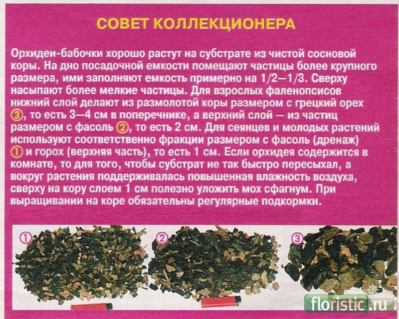орхидея или фаленопсис - Страница 2 22724d1263910114-orhidei-0_1ff08_81ba28fc_xl