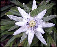 www.floristic.ru - ����������. ����, �������, ������ � �������� � ������
