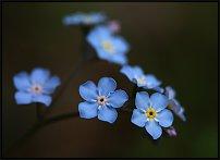 www.floristic.ru - Флористика. Мифы, легенды, сказки и предания о цветах