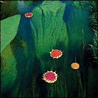 www.floristic.ru - Флористика. Udo Udo Udo in деревья (Nils Udo)