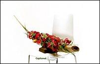 www.floristic.ru - Флористика. Pim van den Akker