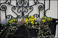 www.floristic.ru - Флористика. Балконный фитодизайн