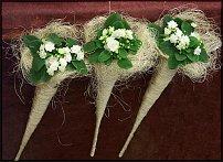 www.floristic.ru - Флористика. Saintpaulia ionantha - Сенполия фиалкоцветная, или узамбарская фиалка