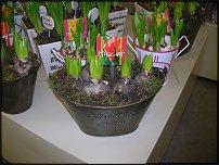 www.floristic.ru - Флористика. Минисад. Композиции с горшечными