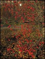 www.floristic.ru - Флористика. Поэзия садов
