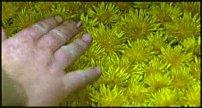 www.floristic.ru - Флористика. Andy Goldsworthy