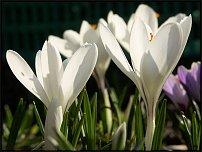 www.floristic.ru - Флористика. С 8 марта !