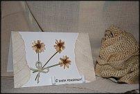 www.floristic.ru - Флористика. Флористические открытки.