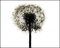 www.floristic.ru - Флористика. Флористика в фототворчестве