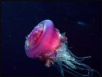 www.floristic.ru - Флористика. Подводный мир