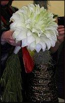 www.floristic.ru - Флористика. Томаш Смирник