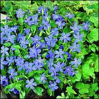 www.floristic.ru - Флористика. Вопросы по садовым цветам