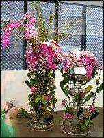 www.floristic.ru - Флористика. Флористика в Калифорнии