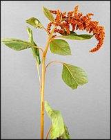 www.floristic.ru - Флористика. Стаффаж, или растения для массовки))