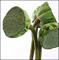 www.floristic.ru - Флористика. И немножко зелени...