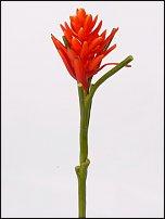 www.floristic.ru - Флористика. Геликония