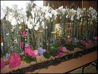 www.floristic.ru - Флористика. Фестиваль цветов в Риксос-Прикарпатье 7-9 мая