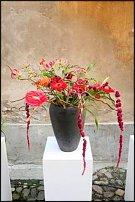 www.floristic.ru - Флористика. Rob Plattel