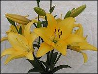 www.floristic.ru - Флористика. Лилия(Lilium)